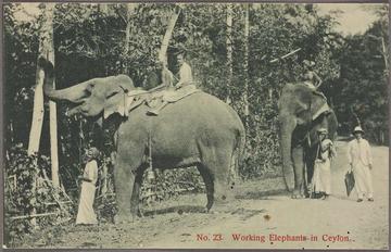 working elephants in ceylo